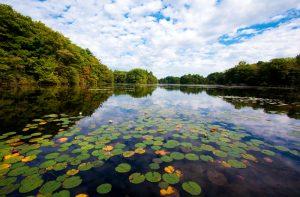 Ames Pond Easton, MA